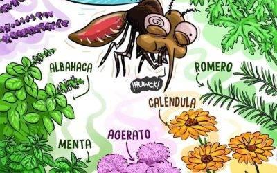 Plantas antimosquitos