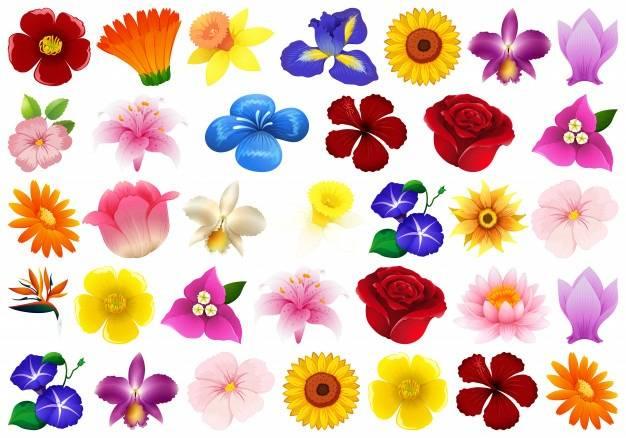 Simbología de los colores en las flores