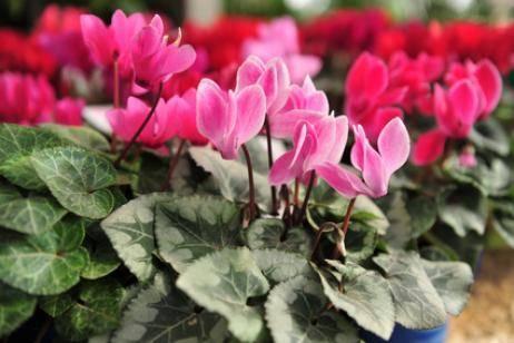 Flores y plantas para el otoño